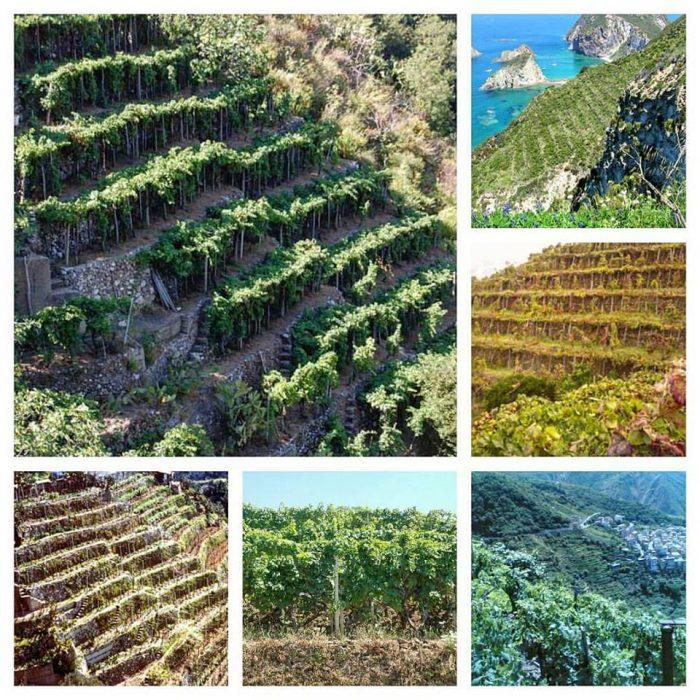 vini costa viola - terrazzamenti